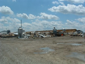 Babar Hog Barns Destroyed (click image to view larger version)
