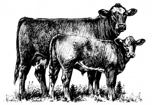 cattle-clip-art-1