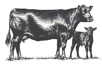 cow-calf graphic